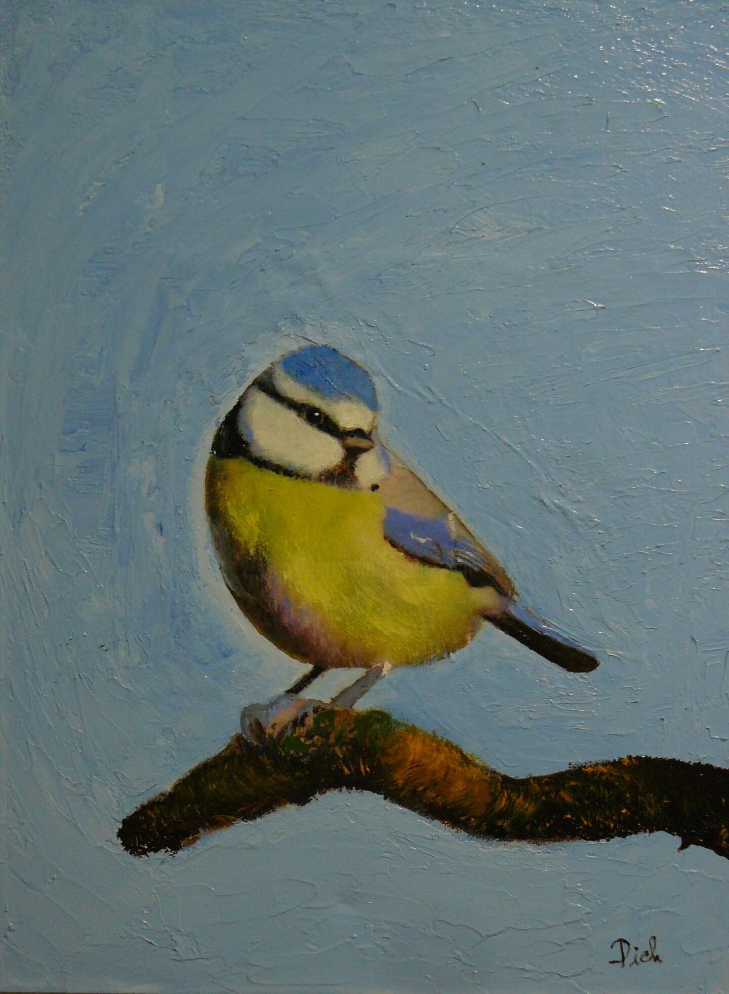 Pich - La mésange bleue