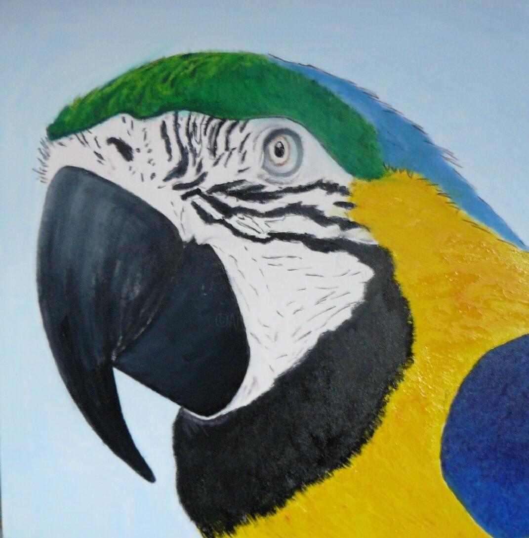 Pich - Ara bleu du parc amazonia