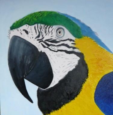 Ara bleu du parc amazonia